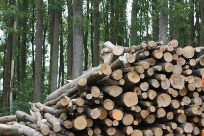 Biomassa de pi