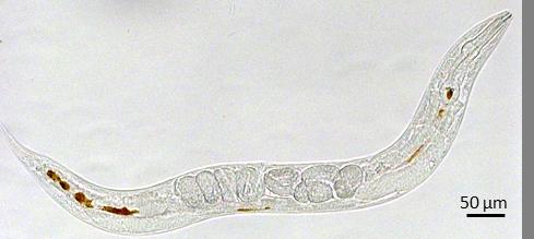 IM-MIRAS-ICMAB_Nanotoxicology